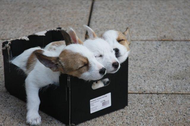 Тюменские подростки искали хозяев для спасенных щенков
