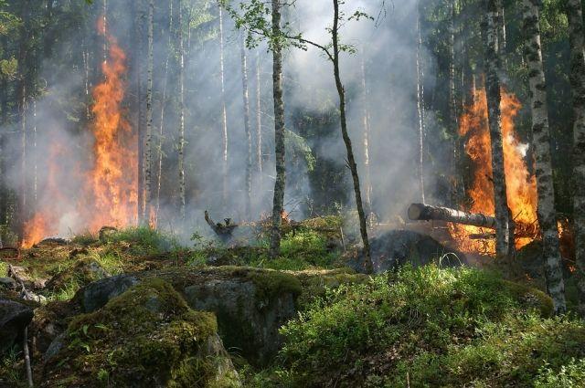 Лесной пожар возник из-за грозы