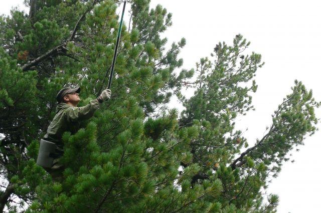 Кузбасские лесничие, полиция и общественные лесные инспекторы будут следить за порядком в лесах.
