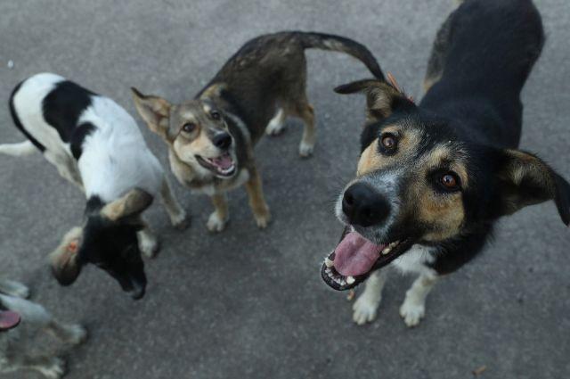 В Николаеве временно прекратят отлавливать собак из-за защитников животных