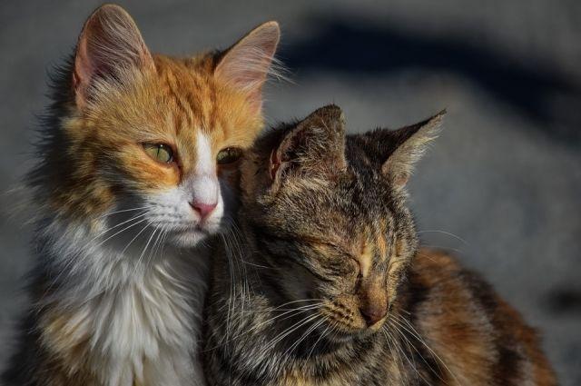 В Новом Уренгое женщина поселила в гараже сорок кошек