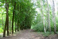 Реадовский парк - излюбленное горожанами место отдыха.