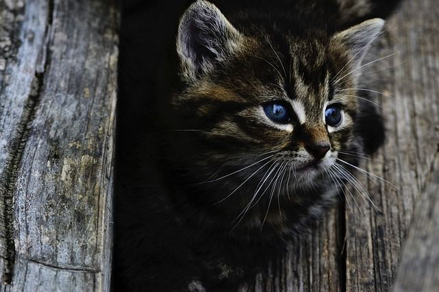 Родители говорят, что котенок был болен.