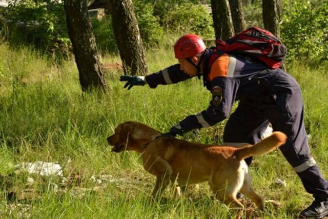 Спасателям еженедельно поступают сообщения о заблудившихся в лесу