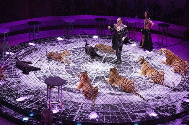Тюменцы увидят обновленное цирковое шоу «Баронеты»