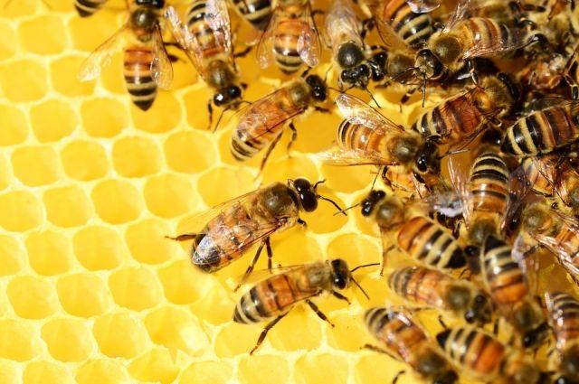 В Приангарье любители мёда не останутся без сладкого лакомства.