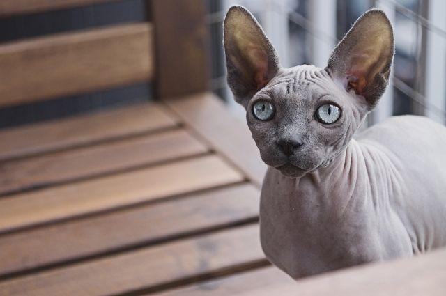 Тюменцы нашли на болоте лысую кошку с розовым когтем