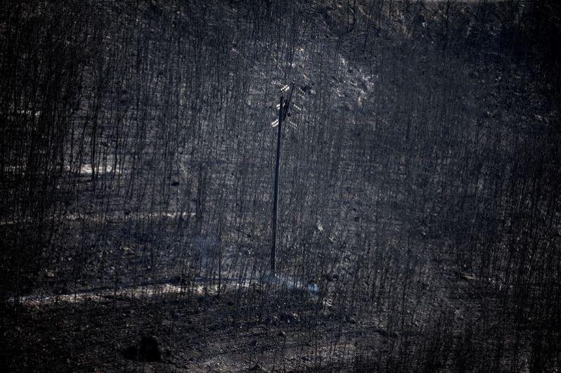 Фонарный столб среди сожженных деревьев в поселении Неос Вутзас.