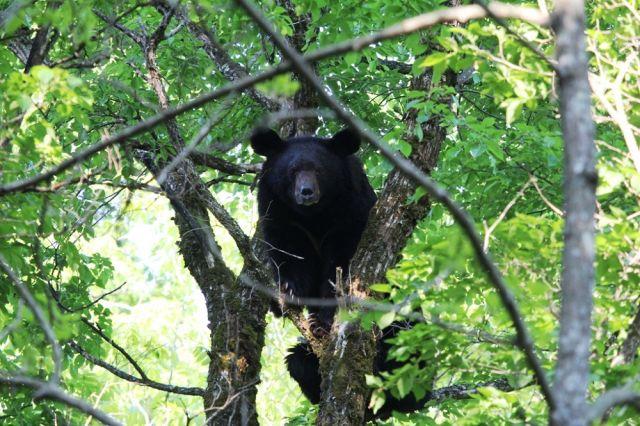 Встреча с медведем раскрывает сверхспособности человека.