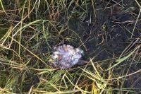Ветеринары насчитали 30 мертвых птенцов.