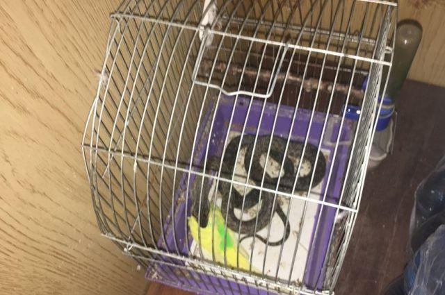 В Николаеве женщина обнаружила на своем балконе в клетке с попугаем змею