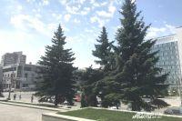 Деревья возле КДЦ нуждались в лечении.
