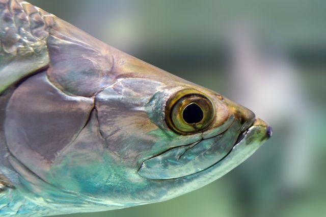 На южных тюменских озерах будет больше корма для рыбы