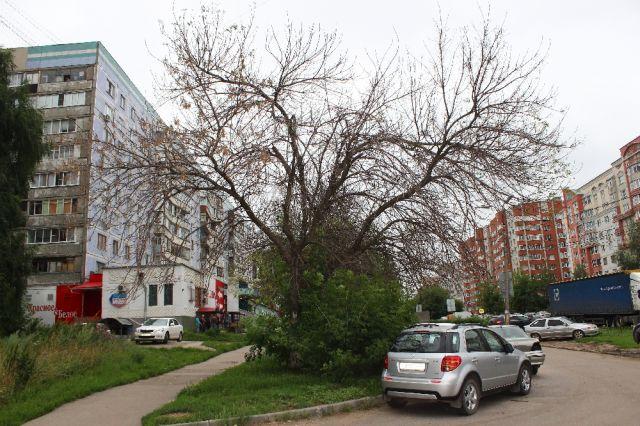 Сотни деревьев в Рязани засохли в этом году