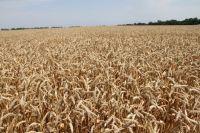 Оренбургские аграрии получат 237 млн на горюче-смазочные материалы.