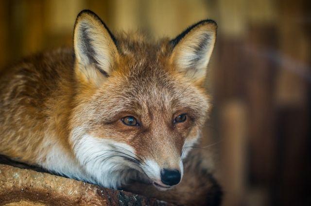 Бродячие животные крайне опасны для человека, особенно для детей