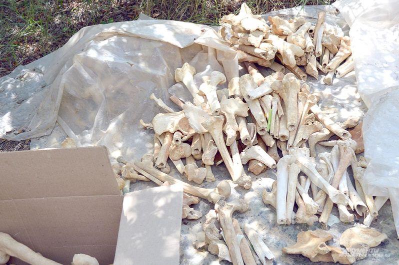 Останки, найденные в склепах и могилах, тоже будут изучать