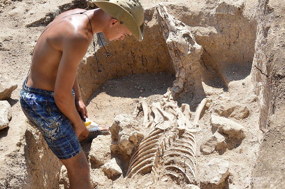 На отдельном участке могильника сарматы хоронили лошадей