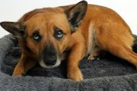 В Хмельницком собаку выбросили с девятого этажа