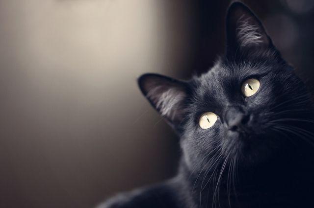 «Булгаковский дом» проинформировал опохищении кота Бегемота