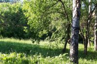 Тюменская прокуратура отменила вырубку лесного участка с редкими растениями