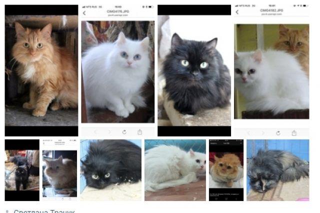 После смерти тюменки более 20 кошек могут оказаться на улице
