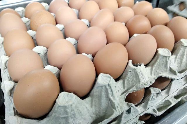 В Тюменской области пройдет первый «Яйцефест»