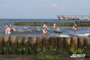 У зеленоградского побережья буро-зелёная каша: море заполонили водоросли. Смельчаки лезут в этот бульон купаться.