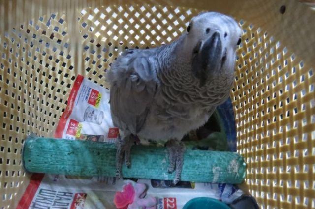 Самый дорогой попугай стоит 350 тысяч рублей.