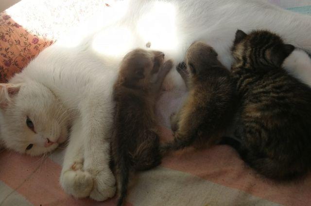 Кошка не делит детенышей на своих и приемных.