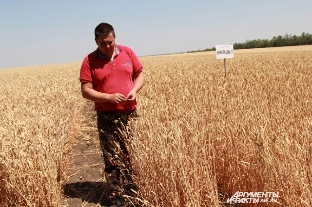 В Ростовской области завершается жатва зерновых культур.