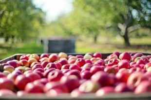 Девушки на яблоках ворожили, надеясь счастливо выйти замуж.
