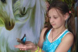 Бабочка может стать подарком, живым аксесуаром для фотосессии и домашним питомцем