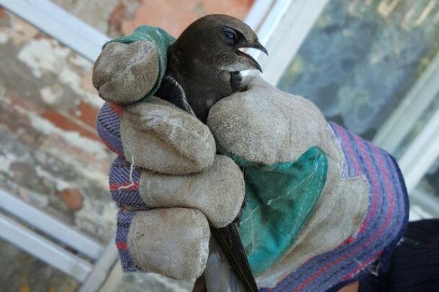 Застрявшую под крышей птицу достали и выпустили на волю.