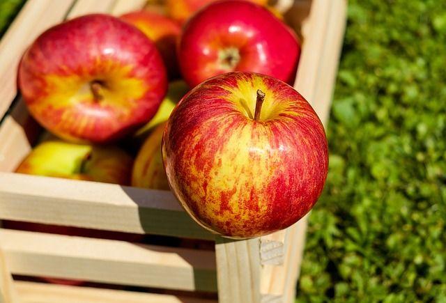 Некоторые сорта яблок хранятся совсем недолго, поэтому нужно успеть извлечь из плодов максимум пользы.