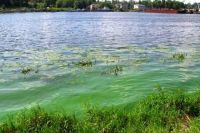 Водоросли-убийцы: Экологи бьют тревогу из-за катастрофы на Днепре