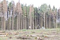 В Украине массово гибнут леса: названа причина