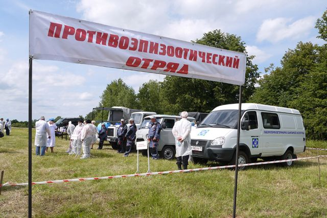 Вирус АЧС зафиксирован в Озерском и Гусевском районах области.