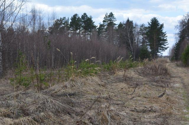 Лопух, несмотря на его полезные свойства, остается сорняком