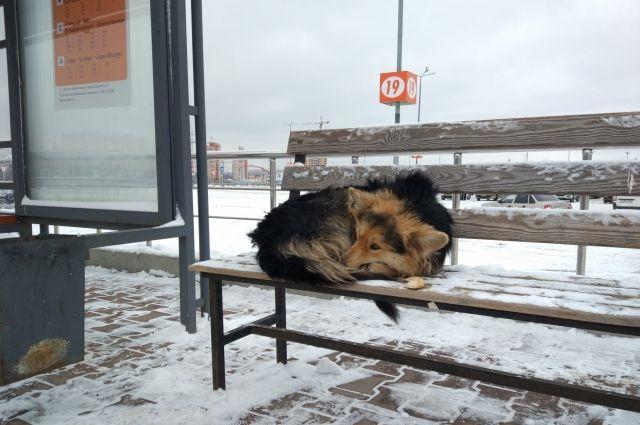 В Ноябрьске контракт на отлов безнадзорных животных выиграли омичи