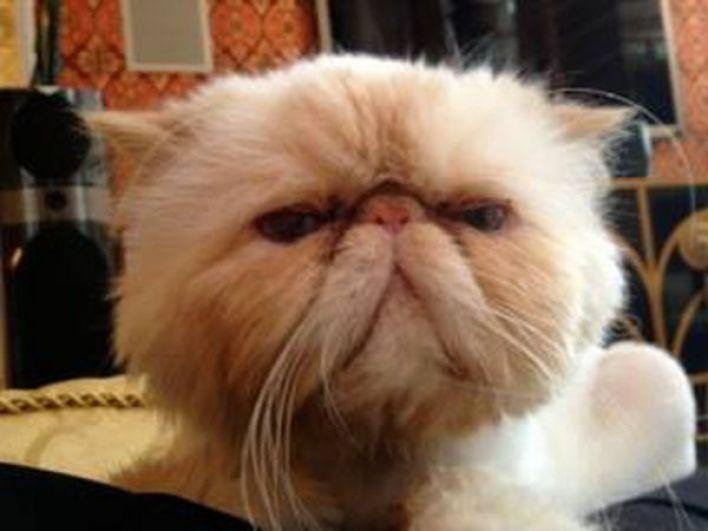 У Камалии дома проживает кот по имени Кристалл, он - полноправный член