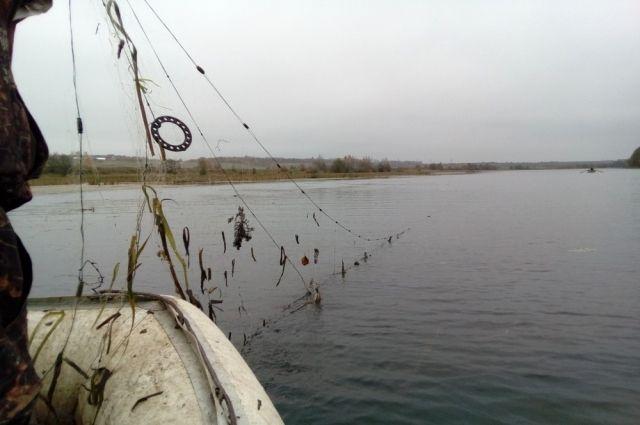 Браконьеры ловят рыбу сетью.