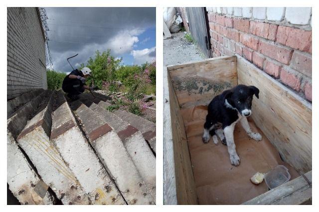 Операция по извлечению животных из-под громоздких стройматериалов длилась два дня.