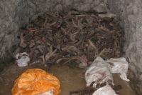 Изъято свыше 1800 заготовленных рогов оленей.
