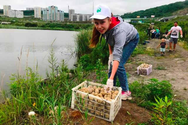 7 тысяч колобков выпустили для очистки безымянного озера на Патрокле