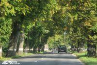 Аллеи вдоль дорог - наследие Кенигсберга.