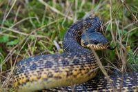 Под Львовом четырехлетний ребенок попал в реанимацию из-за укуса змеи