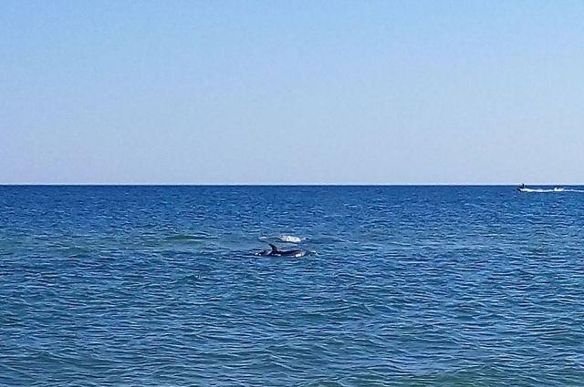 У берегов Украины неизвестное судно незаконно вылавливало дельфинов