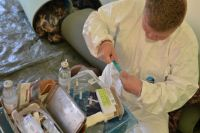 На Ямале вакцинировали против сибирской язвы 50% поголовья оленей