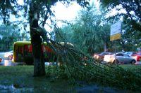 В Тюмени прошел шторм: деревья падали на автомобили, а в ТЦ пробило крышу